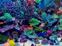 Фрагмент рифового аквариума с жесткими кораллами