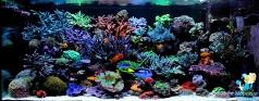 Рифовый аквариум 800 литров в частном доме