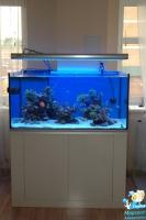 Морской аквариум на 600 литров (123х78х60 см).