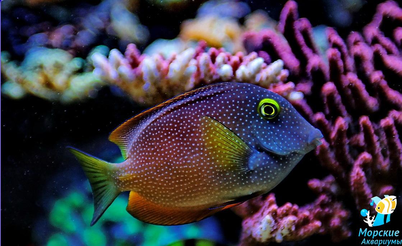 Todo marino for Aquarium valencia precio